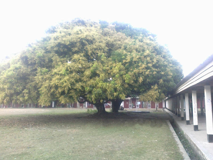 Green tree in front of Daining